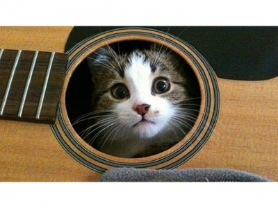 Kitten-Inside-Wooden-Guitar
